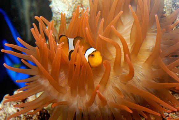 """Tra cuccioli marini e cuccioli """"umani"""" alla scoperta delle meraviglie del mare"""
